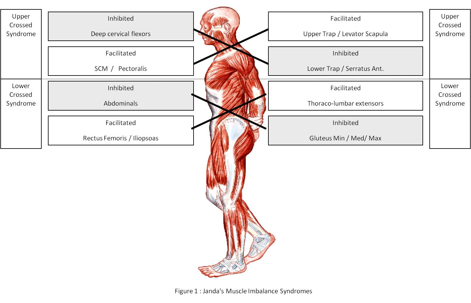 strengthening-your-core-1-1
